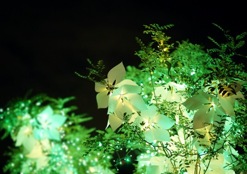 Silentflower02